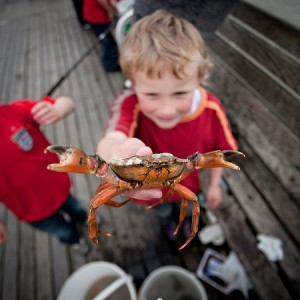 Catch a Crab; Image Credit: Our Norfolk