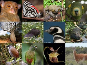 Animals which may soon disappear from the planet; Image credit: worldlandtrust.org