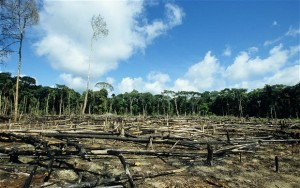 The large-scale cutting down of trees and forests; Image credit: telegraph.co.uk